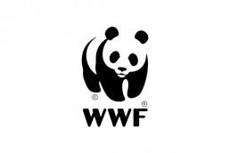 Logo WWF - Zee Média